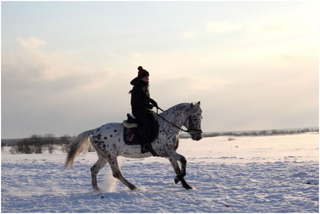 Катание на лошадях елизово
